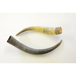 Afrikanske horn